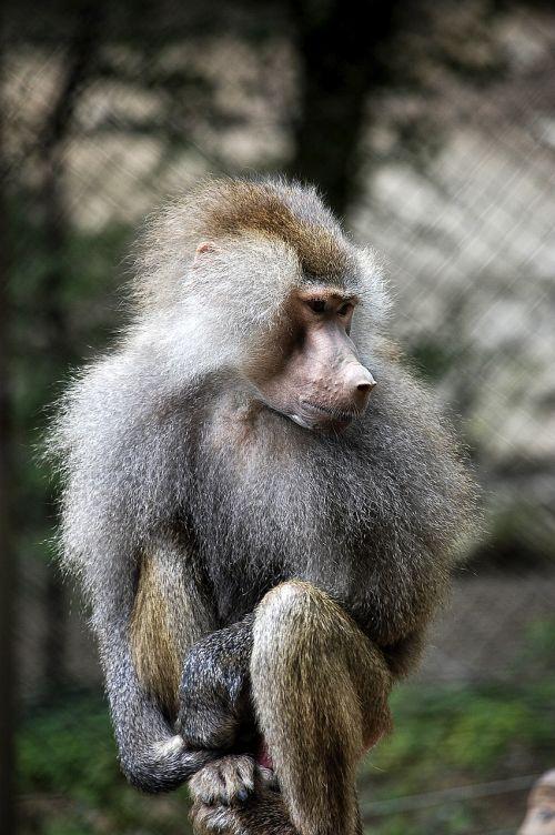 fauna primates apes