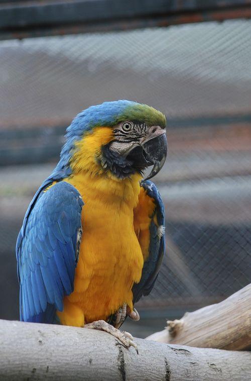 fauna birds parrot