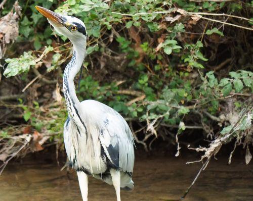 fauna animals bird