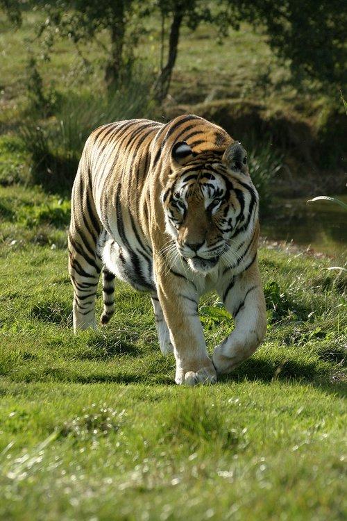 fauna  mammal  animal