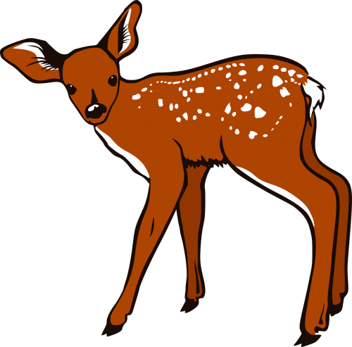 fawn baby brown