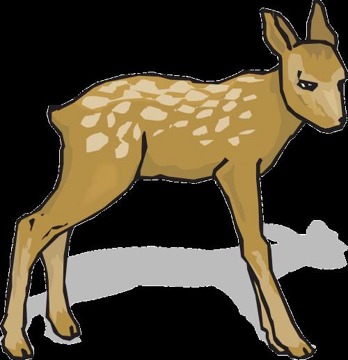 fawn animal deer