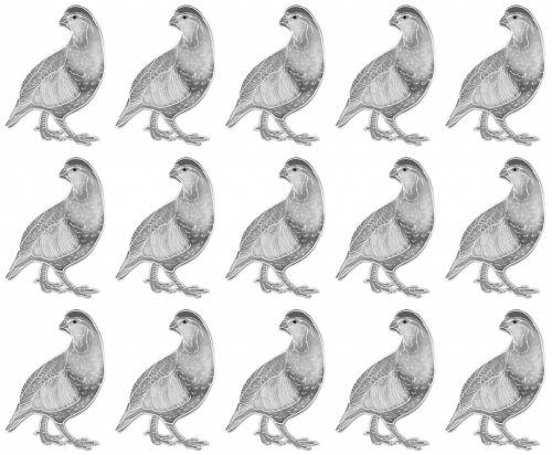 Pheasant Gray White