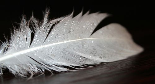 feather feather fluff white