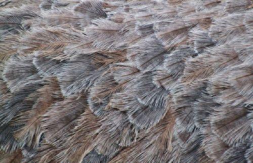 feather bird animal