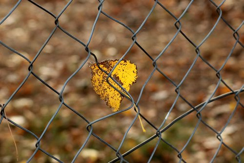 feather  autumn  fencing