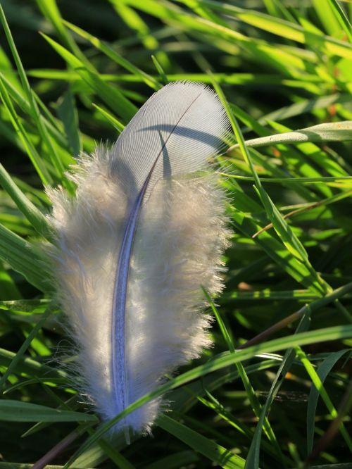 feather white bird
