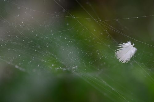 feather spiderweb nature