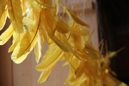 plunksna,geltona,plumėjimas