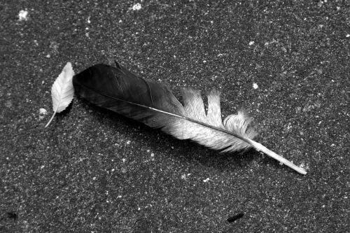 feather nature bird