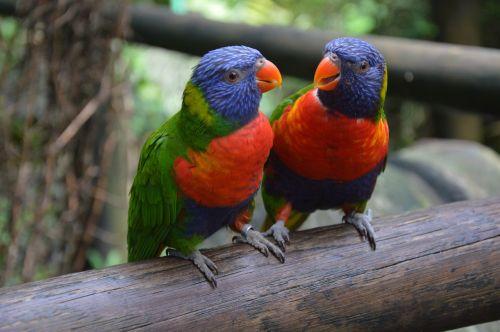 feathers bird ornithology