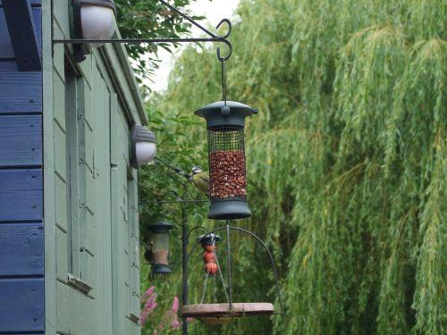 feeder feeding birds feeding