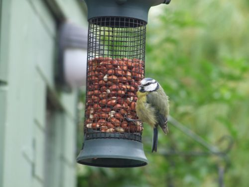 feeder feeding birds grain