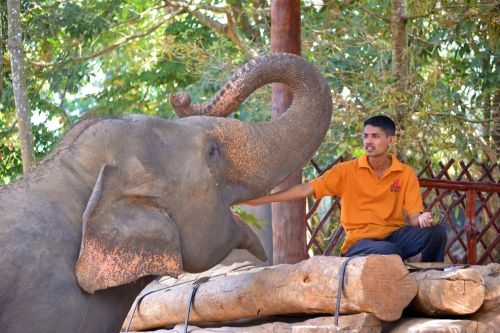 feeding elephant elephant jumbo