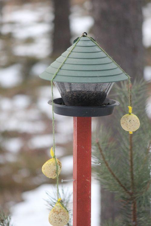 feeding the birds great tit winter