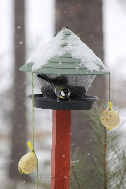 feeding the birds winter rantasalmi