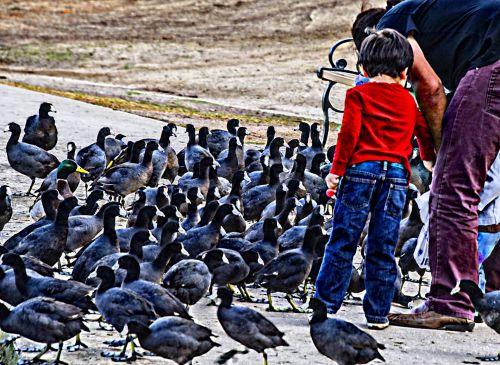 berniukas, paukščiai, tėtis, maitinimas, duona, ežeras, kačiukas, antis, linksma, kartu, paukščių maitinimas