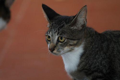 feline feline look tuned