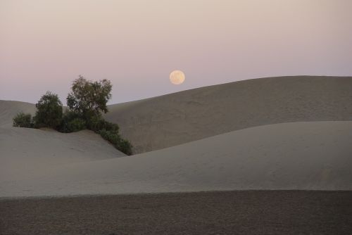 feminine moon dune