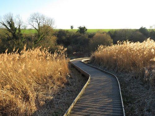 fen  marsh  reeds