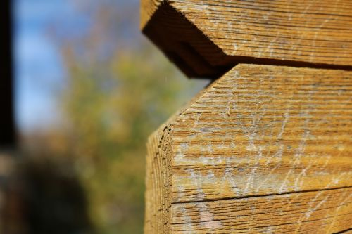 fence boards paling