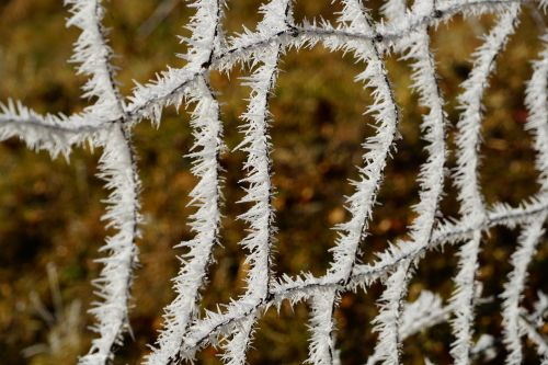 fence hoarfrost wildzaun