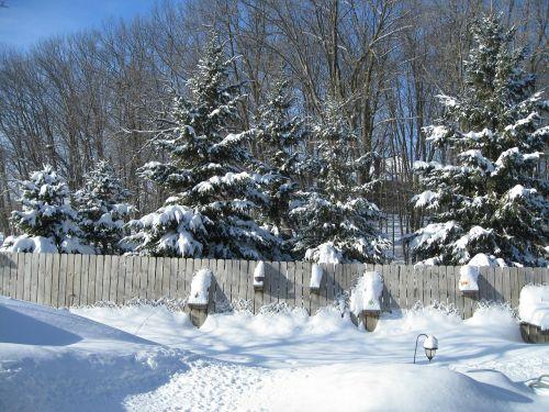 tvora,miškai,sezonas,balta,šaltas,ledas,sniegas,žiema,šaltis,snieguotas,sušaldyta,lauke,oras,sniegas,Saunus,ledinis,sniegas,blizzard,sniegas