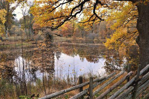 fence outdoor autumn