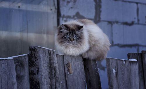 fence mammals cat