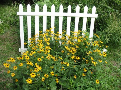 fence picket fence flowers