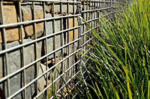 fenced wall weeds protest