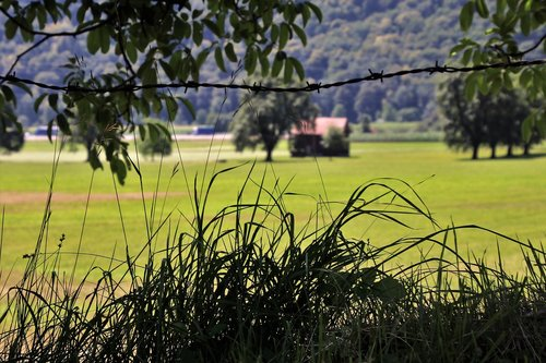 fencing of pastures  meadow  alpine