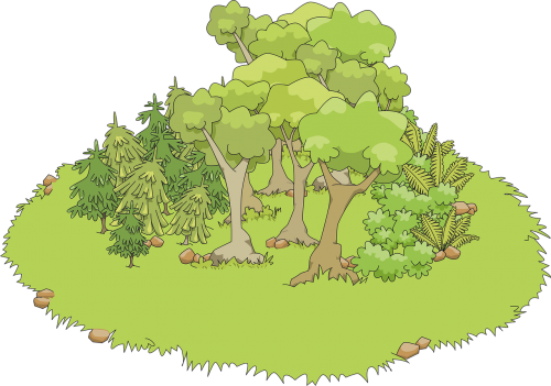 fern fir grass
