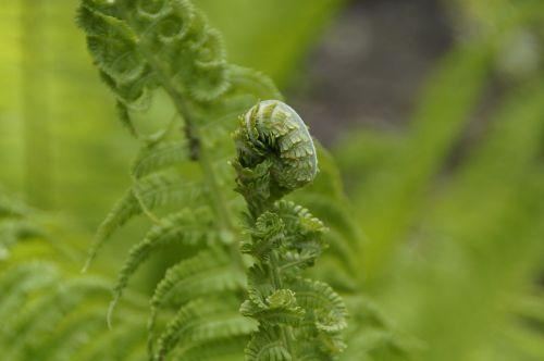 fern green detail