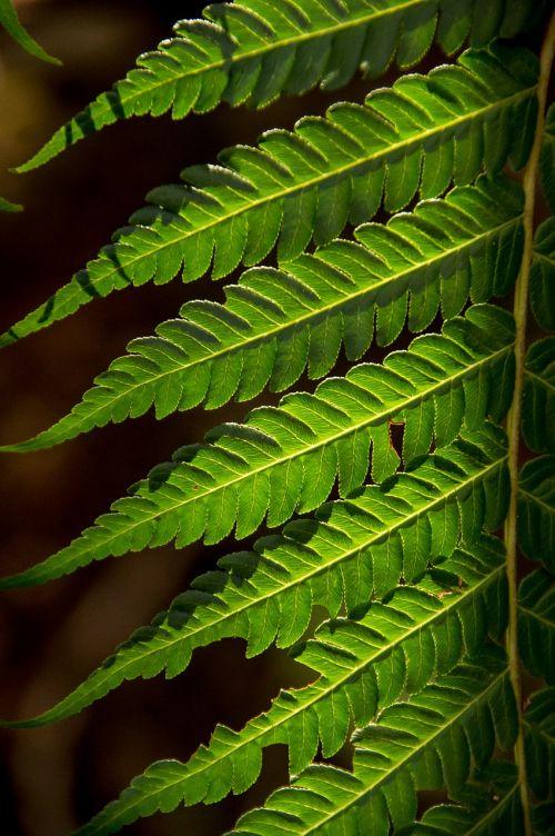 fern leaf green
