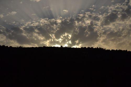 fern sky rays