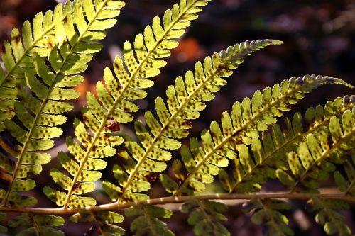 fern green sun