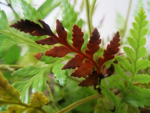 fern green leaf