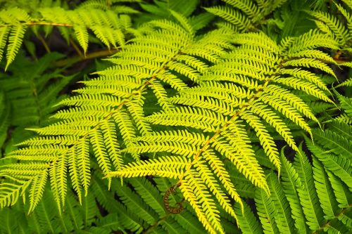 fern plant forest plant
