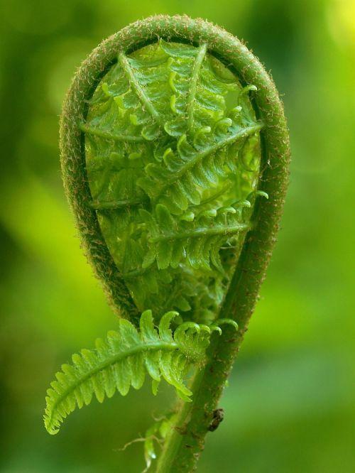 fern green plant