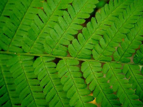 fern green forest