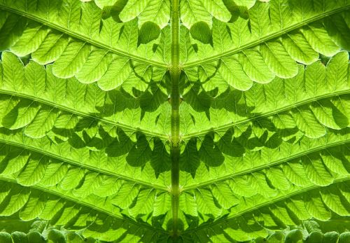fern forest plant