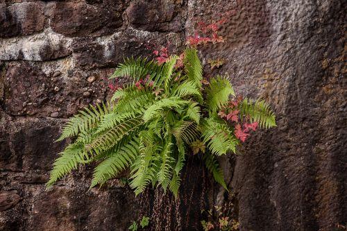 fern masonry nature