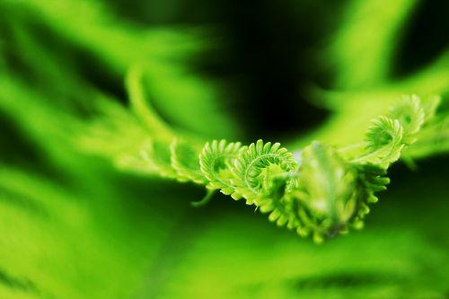 fern bracken nature