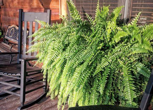 fern rocking chair farm