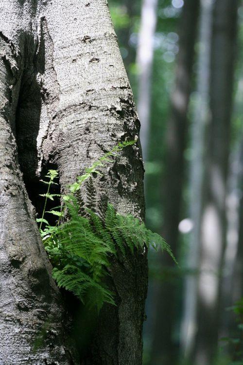fern wood green