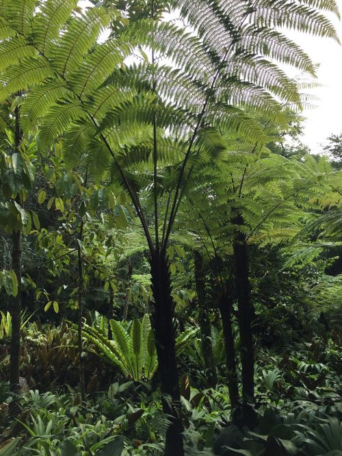 fern rainforest lush