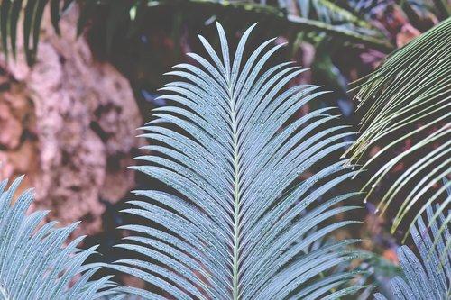 fern fern leaf  wedel  fern plant