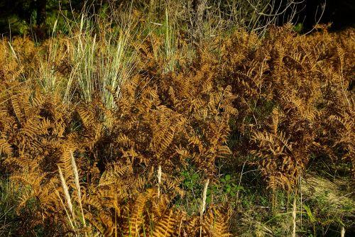 ferns vegetation fall