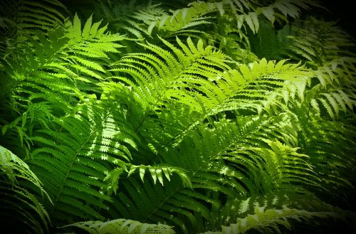 ferns green stuff sunbeam